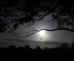 Nacht der Nacht