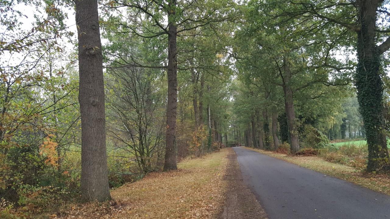 Wandeltocht-Markvelde