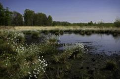 IVN-Wandeling Haaksbergerveen (5 km)