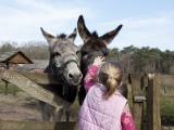 Paardrijden, pony en ezelrijden & huifkarverhuur