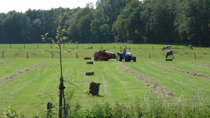 Kruimelboerderij Koelant