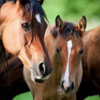 Pony- en Paardenmarkt Enter