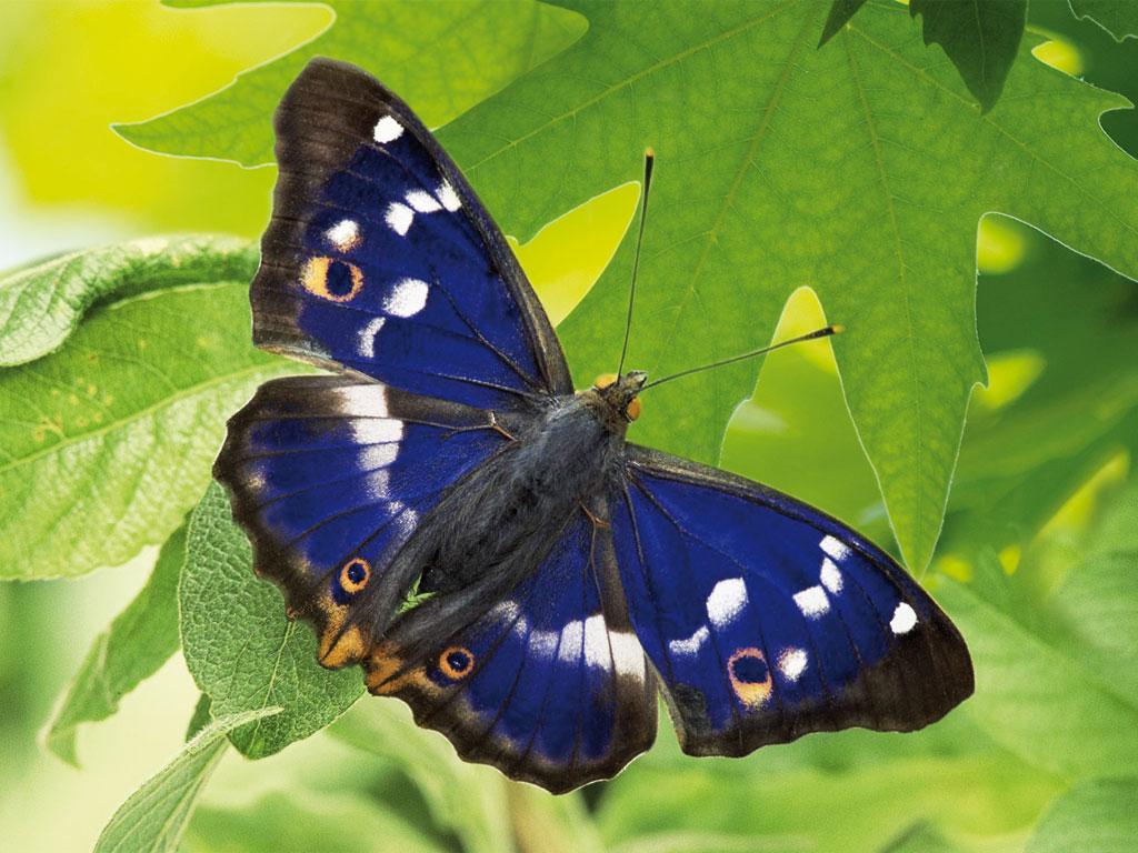 IVN-Onderhoud-Vlindertuin