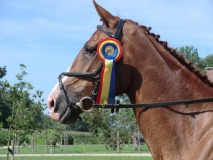 Vincent's Horses
