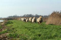 Schapenboerderij De Boer