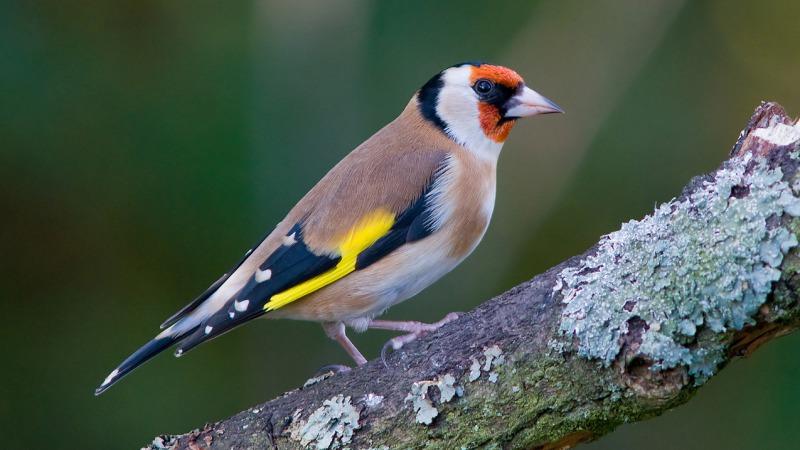 Nationale Vogelweek