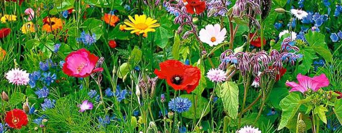 Bloemen planten tuin uit in enschede - Alle tuin ...
