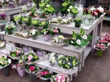 Blumen, Pflanzen & Garten