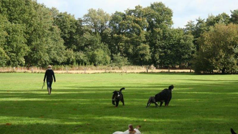 Unangeschnallten Wandergebiet für Hunden