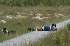 Stichting Schaapskudde Haaksbergen
