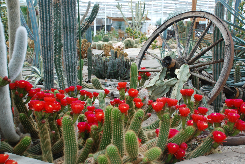 Pinksteren-bij-Belevingspark-CactusOase