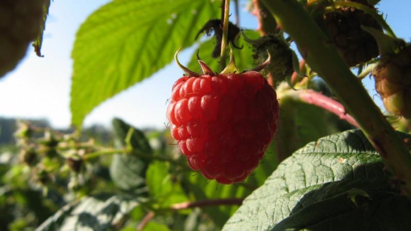 Fruitboerderij Düvelshofke
