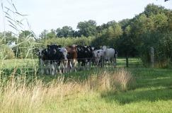 Boerenerven- & Hoogveenroute (10 km)