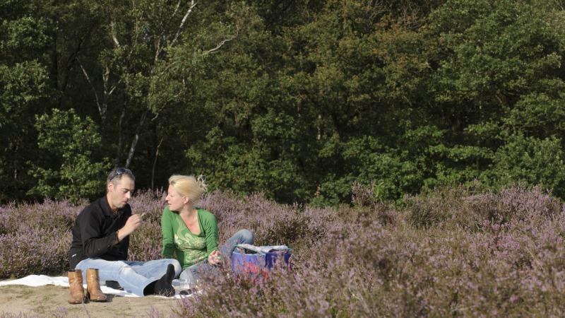 Zomerse wandeling en picknick langs de bloeiende heide