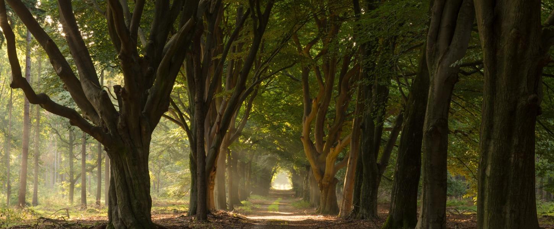 Naturgebiete in Twente