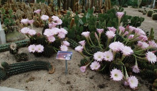 Belevingspark Cactus Oase