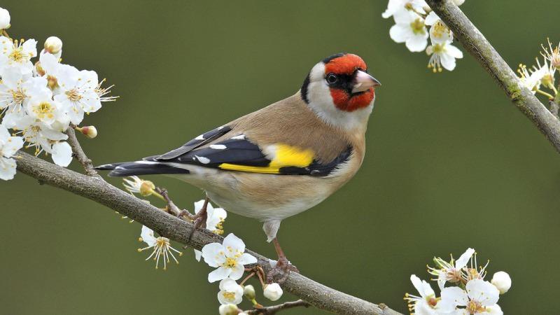 Grote Vogelshow Vroomshoop