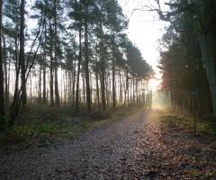 Een wandeling in stilte