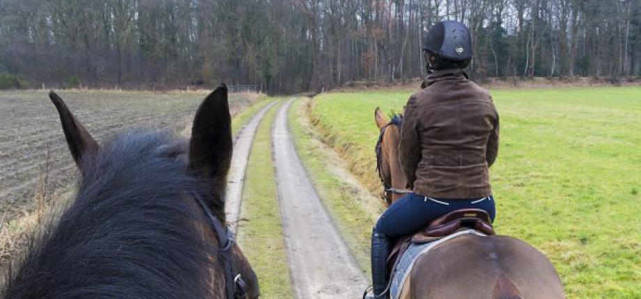 Paardrijden in Twente