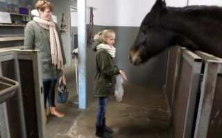 Rommelmarkt en paarden knuffelen