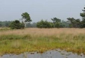Boetelerveld