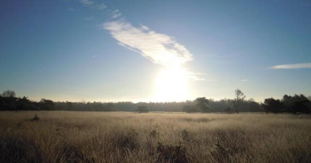 Boetelerveld: Natura 2000