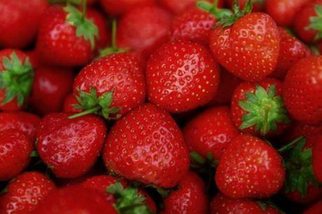 Aardbeien bij 'T Evenbelt