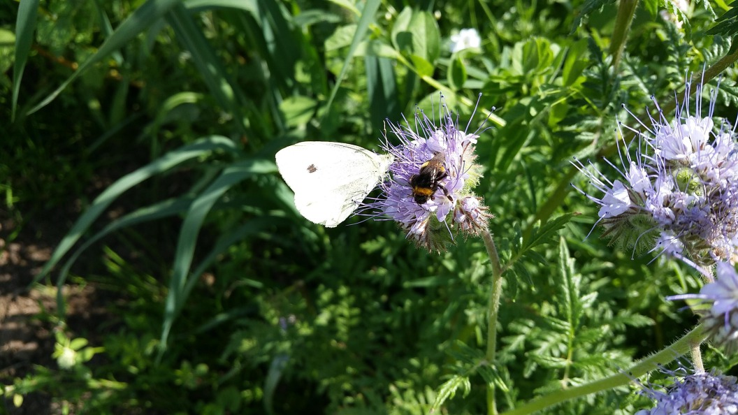 Meer bloemen, bijen & vlinders