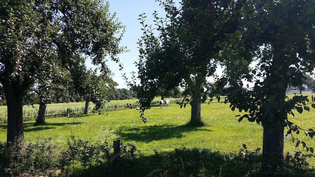 Fruitboomgaarden