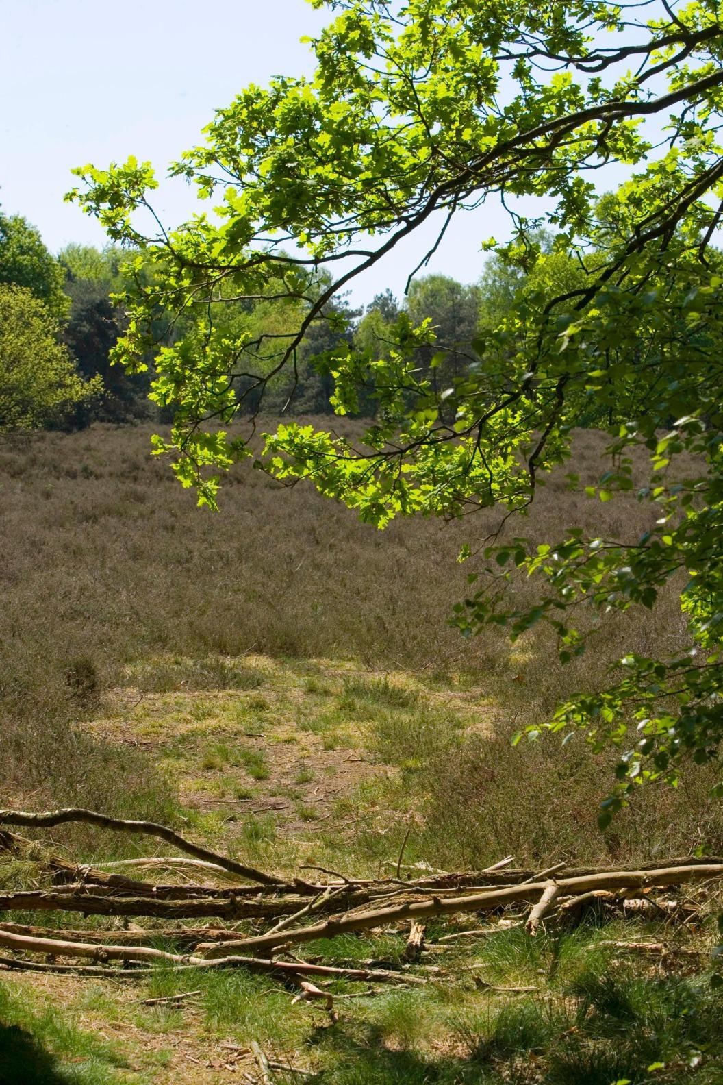 Natuurgebied de Luttenberg