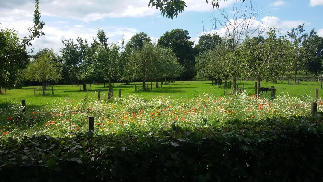 Boomgaard landerij Krukkert