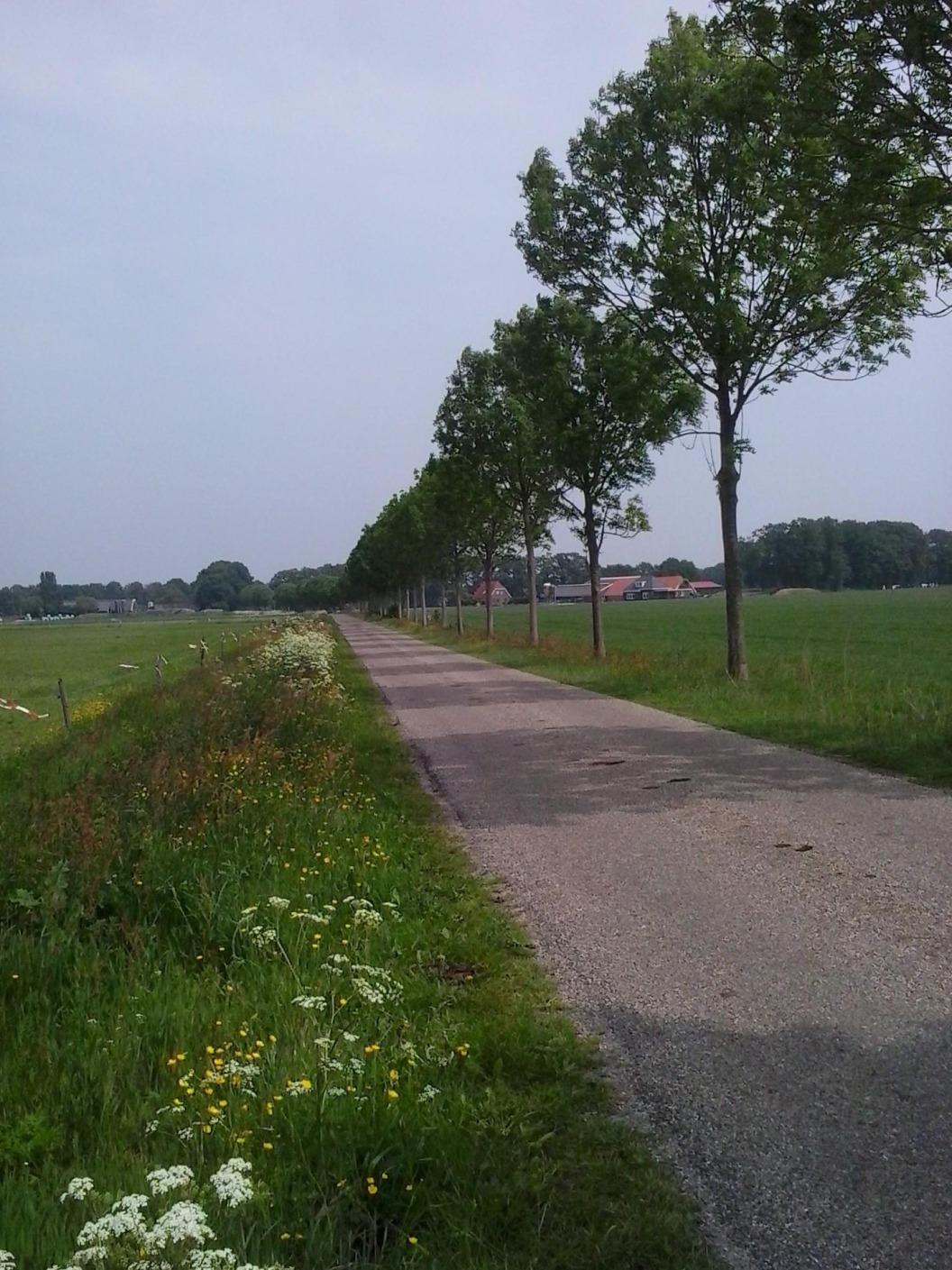 Schanekampsweg