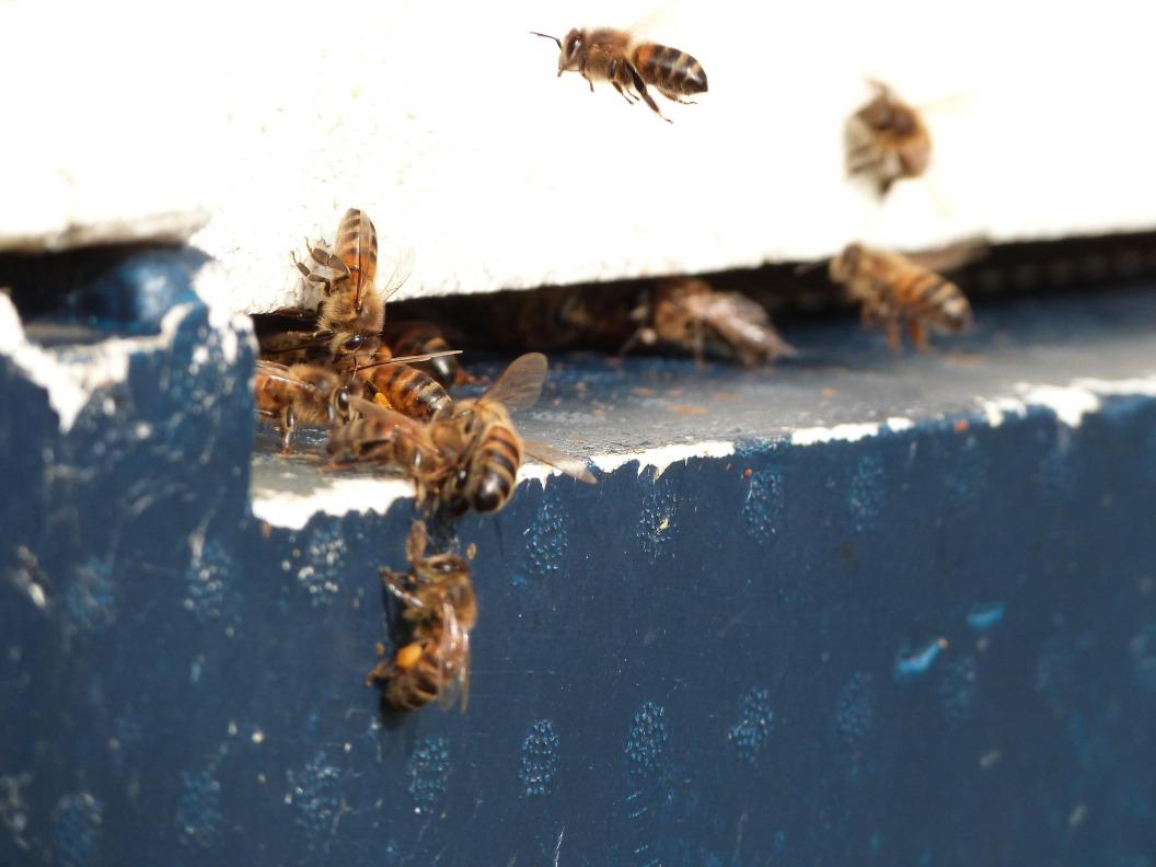 Bijenstal