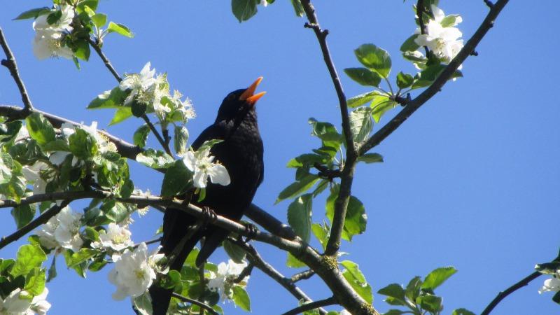 IVN-wandeling met vogelzang