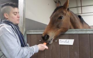 Je kan weer paarden knuffelen tevens rommelmarkt