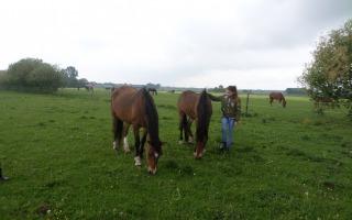 Je kan weer paarden knuffelen en tevens rommelmarkt