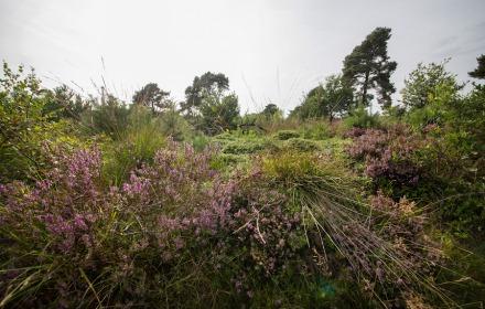 Heide, planten en dieren