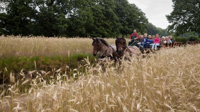 Met paard en wagen door het Springendal