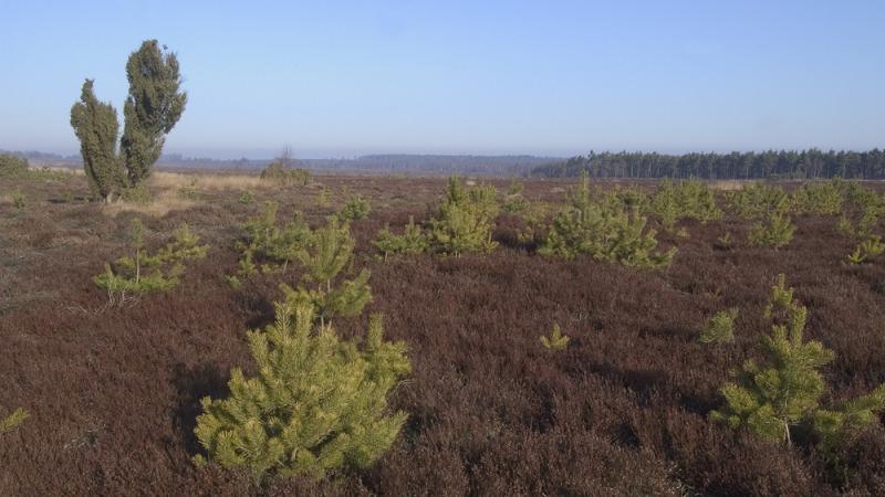 Door de bomen het bos zien – op pad met een natuurgids