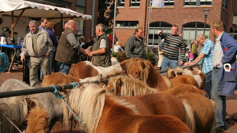 Paarden & Ponymarkt