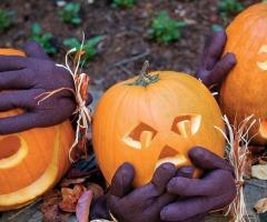 Geen Halloween Losser