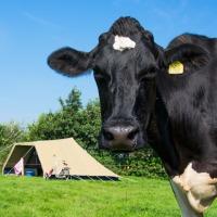 Boerencamping in Twente