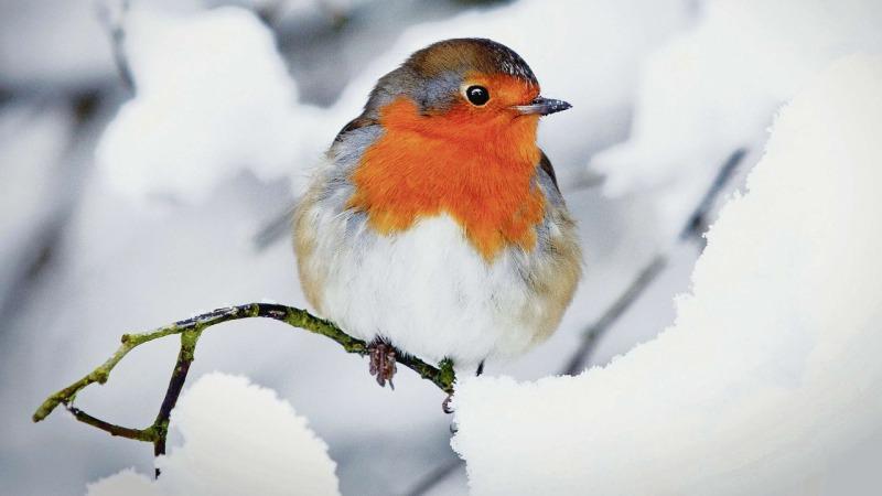 """Lezing: """"Hoe komen de vogels de winter door"""""""