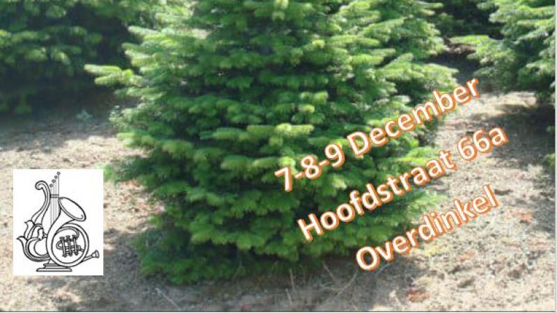 Kerstbomen verkoop Concordia Overdinkel