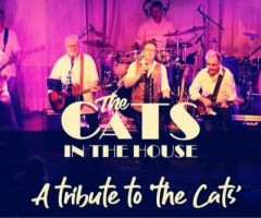 The Cats in the House