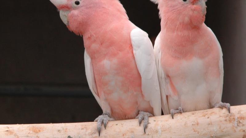 Nationale Vogeltentoonstelling Mondial 2019