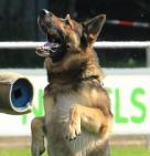 Hondenvereniging