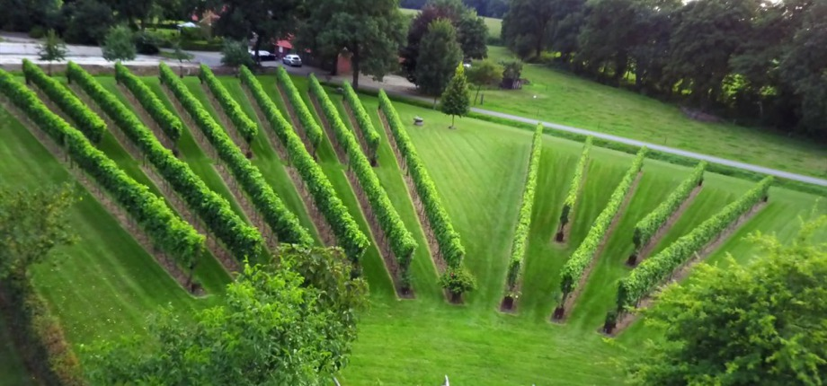 Neem een kijkje bij de wijngaard