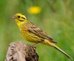 MuseumJeugdUniversiteit: Ieder vogeltje zingt zoals het gebekt is