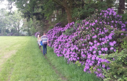 Rododendron wandeltocht